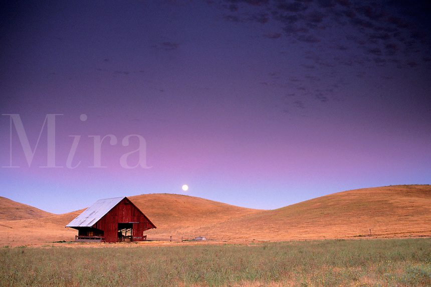 Full moon rising in purple evening sky light over golden grass hills, field, and barn, near Livermore, California.