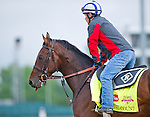 April 29, 2014:  Medal Count, trained by Dale Romans, exercises in preparation for the Kentucky Derby at Churchill Downs in Louisville, KY. Scott Serio/ESW/CSM