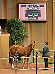 Hip 253 More Than Ready - Miss Lavinia colt consigned by Indian Creek, sold for $400,000.  November 7,2012.