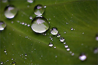 Close-up of water droplets on green leaves