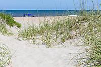 Avon, Outer Banks, North Carolina. Sea Oats Help Stabilize Dunes along the Beach.