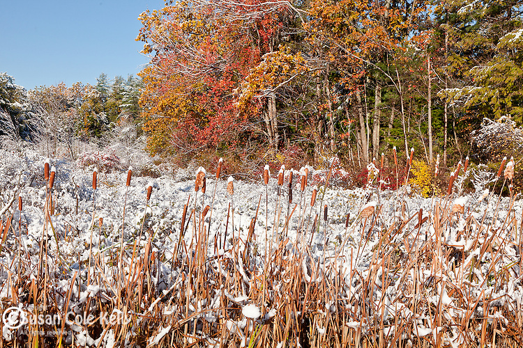 Early snow on fall foliage in the Wachusett Mountain Reservation, Princeton, MA, USA