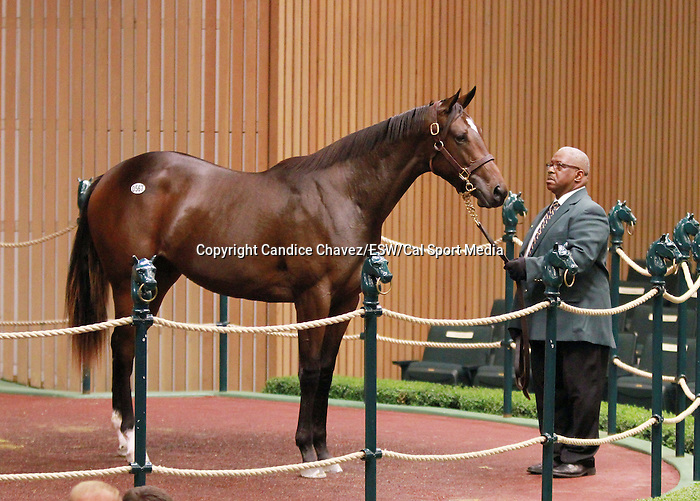 September 10, 2014: Hip #567 Malibu Moon - D'cats Meow filly consigned by Hidden Brook sold for $450,000 to Niall Brennan at the Keeneland September Yearling Sale.   Candice Chavez/ESW/CSM