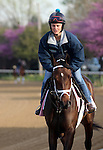 April 21, 2014  Got Lucky and rider Amy Lyn Mullen jog at Churchill Downs.  She is trained by Todd Pletcher, owned by Hill 'n' Dale Equine Holdings, Inc. and Philip J. Steinberg, and finished second in the Gazelle Stakes at Aqueduct. Her stablemate My Miss Sophia can be seen in the background.