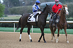 HOT SPRINGS, AR - March 11: Elate, #2, ridden by Jose Lezcano in the post parade prior to the Honeybee Stakes at Oaklawn Park on March 11, 2017 in Hot Springs, AR. (Photo by Ciara Bowen/Eclipse Sportswire/Getty Images)