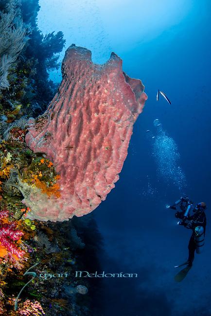Giant Sponge w Kitty Lam near Boo Window