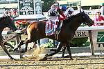 June 7, 2014: Tonalist with Joel Rosario score an upset win the 146th running of the Grade I Belmont Stakes  for 3-year olds, going 1 1/2 mile at Belmont Park. Trainer: Christophe Clement. Owner:  Robert Evans. Sue Kawczynski/ESW/CSM