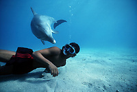 Snorkeling with Bottlenose Dolphin, Tursiops truncatus, Nuweiba, Egypt, Red Sea., Northern Africa