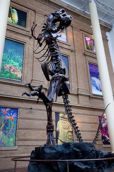 Dinosaur skeleton, Denver museum, Colorado, USA John offers private photo tours of Denver, Boulder and Rocky Mountain National Park. .  John offers private photo tours in Denver, Boulder and throughout Colorado. Year-round.