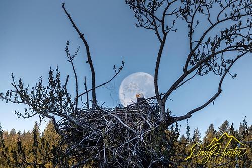Eagles Nest, Full Moon