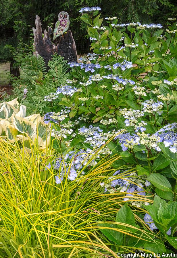 Vashon-Maury Island, WA: Summer perennial garden featuring lacecap hydrangea, sedges, hostas and mosaic owl