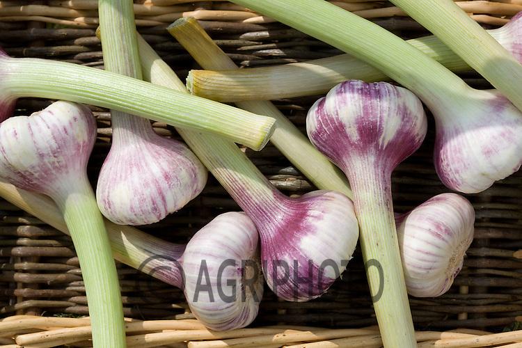 Green Garlic Bulbs