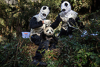 Researchers, dressed in a panda costumes, give a medical check to a four month old, female wild panda at the Hetaoping Panda Conservation Centre. The researchers wear the panda costumes to prevent the wild pandas from becoming accustomed to humans.