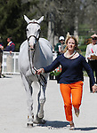 April 23, 2014: Copycat Chloe and Allison Springer during the first horse inspection at the Rolex Three Day Event in Lexington, KY at the Kentucky Horse Park.  Candice Chavez/ESW/CSM