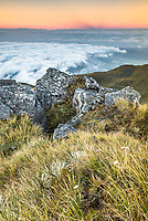 Alpine dawn with clouds covering Tasman Sea, Westland Tai Poutini National Park, West Coast, UNESCO World Heritage Area, New Zealand, NZ