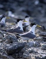 Birds nesting Palau