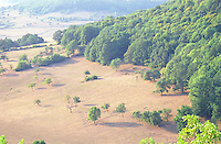 Dry fields in Burgundy a scorching hot summer, cattle tracks and some trees