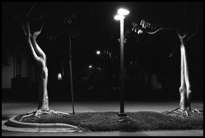 """Trees at night<br /> From """"Miami in Black and White"""" series. Miami, 2006"""