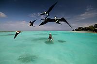 Frigatebirds and Richard Baxter on Home Island, Cocos Keeling Islands, Indian Ocean