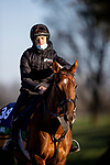 November 3, 2020: Tarnawa, trained by trainer Dermot K. Weld, exercises in preparation for the Breeders' Cup Turf at Keeneland Racetrack in Lexington, Kentucky on November 3, 2020. Alex Evers/Eclipse Sportswire/Breeders Cup