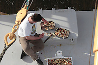 Fisherman cracking shells of Crab claws pincers to prepare for meal on boat deck, Norwegian sea, Norway