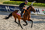 January 22, 2021: Storm The Court exercises as horses prepare for the 2021 Pegasus World Cup Invitational at Gulfstream Park in Hallandale Beach, Florida. Scott Serio/Eclipse Sportswire/CSM