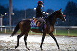 November 1, 2018: Hunting Horn (IRE), trained by Aidan P. O'Brien, exercises in preparation for the Breeders' Cup Turf at Churchill Downs on November 1, 2018 in Louisville, Kentucky. Alex Evers/Eclipse Sportswire/CSM