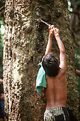 Xapuri, Acre State, Brazil. Young rubber tapper tapping a rubber tree.