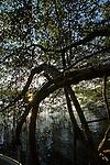 Mangrove trees in Bahia Honda Bay, Isla de Bastimentos, Bocas del Toro, Panama