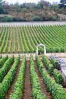 vineyard chevaliers montrachet puligny-montrachet cote de beaune burgundy france