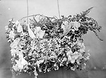 """FUNERAL FLORAL DISPLAY. The flowers bear an inscription """"333,"""" associated with the Knights of Tabor, an early African American fraternal group. Lincoln's chapter in the second decade of the 20th century was called Ricketts Commandery No. 14.<br /> <br /> The genesis of the Knights of Tabor was an African American secret society named The Knights of Liberty and also the Knights of Tabor and the International Order of Twelve that was formed in 1846 by Moses Dickson. The main purpose of the group, which was formed by 12 men in St. Louis, was to organize a slave rebellion. In his writings, Dickson claimed the secret organization had 46,000 members. When it was clear the Civil War would happen, Dickson changed the focus to assisting in the Underground Railroad (their literature states they helped 70,000 slaves escape) and later to a benevolent society with men's and women's groups. Unlike most benevolent societies where the women were subservient to the men, the Knights and Daughters of Tabor were equals.<br /> <br /> Photographs taken on black and white glass negatives by African American photographer John Johnson from 1910 to 1925 in Lincoln, Nebraska. Douglas Keister has 280 5x7 glass negatives taken by these photographers. Larger scans available on request."""