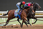 ARCADIA, CA - OCT 31: Klimt, owned by Kaleem Shah, Inc. and trained by Bob Baffert, exercises in preparation for the Breeders' Cup Sentient Jet Juvenile at Santa Anita Park on October 31, 2016 in Arcadia, California. (Photo by Douglas DeFelice/Eclipse Sportswire/Breeders Cup)