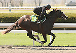 07 April 2011.  Hip #83 Tiznow - Well Dressed colt, consigned by Niall Brennan.  Full sibling to Well Armed.
