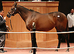 Hip #82 Cat Dancer consigned by Hill n' Dale Sales Agency sold for $1,400,000 to STONESTREET TH'BRED HOLDINGS at the Fasig Tipton November Sale on November 6, 2011.
