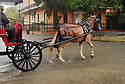 A mule-drawn carriage races to escape flooded streets in the historic French Quarter after city pumps were overwhelmed, sending residents and tourists scurrying for dry land, New Orleans, Sat., Aug. 5, 2017. (Photo by Cheryl Gerber)