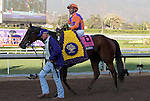 ARCADIA, CA - NOV 04: Beholder #8, ridden by Gary Stevens, is led to the winner's circle after winning the Breeders' Cup Longines Distaff at Santa Anita Park on November 4, 2016 in Arcadia, California. (Photo by Zoe Metz/Eclipse Sportswire/Breeders Cup)