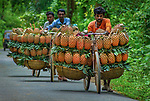 Pineapples being carried on bikes by Abdul Momin