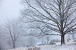 Europa, DEU, Deutschland, Hessen, Rhoen, Poppenhausen (Wasserkuppe), Naturpark Hessische Rhoen, Biosphaerenreservat Rhoen, Wintereinbruch, Typische Landschaft, Schnee, Baeume, Kategorien und Themen, Natur, Umwelt, Landschaft, Jahreszeiten, Stimmungen, Landschaftsfotografie, Landschaften, Landschaftsphoto, Landschaftsphotographie, Wetter, Wetterelemente, Wetterlage, Wetterkunde, Witterung, Witterungsbedingungen, Wettererscheinungen, Meteorologie, Wettervorhersage<br /> <br /> [Fuer die Nutzung gelten die jeweils gueltigen Allgemeinen Liefer-und Geschaeftsbedingungen. Nutzung nur gegen Verwendungsmeldung und Nachweis. Download der AGB unter http://www.image-box.com oder werden auf Anfrage zugesendet. Freigabe ist vorher erforderlich. Jede Nutzung des Fotos ist honorarpflichtig gemaess derzeit gueltiger MFM Liste - Kontakt, Uwe Schmid-Fotografie, Duisburg, Tel. (+49).2065.677997, ..archiv@image-box.com, www.image-box.com]