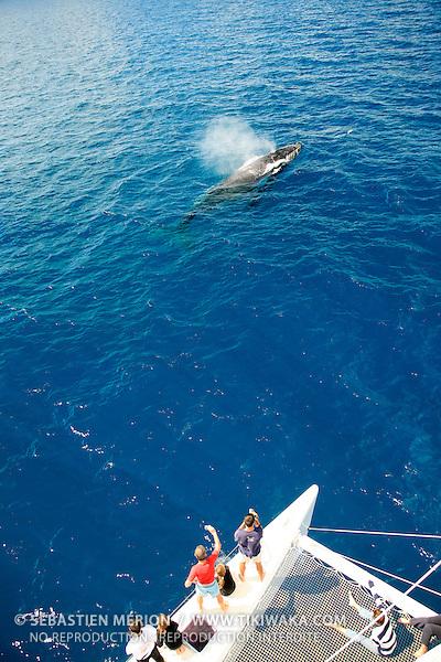 Observation des baleines à bosse (whale watching) à bord d'un catamaran au large de la baie de Prony, lagon sud de la Nouvelle-Calédonie. Chaque hiver, de juillet à septembre, une petite population de baleines à bosse (Megaptera Novaeangliae) vient de l'antarctique pour se reproduire dans les eaux calédoniennes.