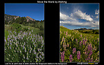 Move the World by Walking.<br />