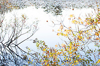 Native shrubs in autumn silhouette against Blackwater Pond, Cape Cod National Seashore, Massachuesettes