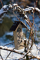 Vogelfutter, Vogel-Futter, Vogel-Fettfutter mit Sonnenblumenkernen und anderen Zutaten in selbstgebautem Futterhäuschen, im winterlichen Garten