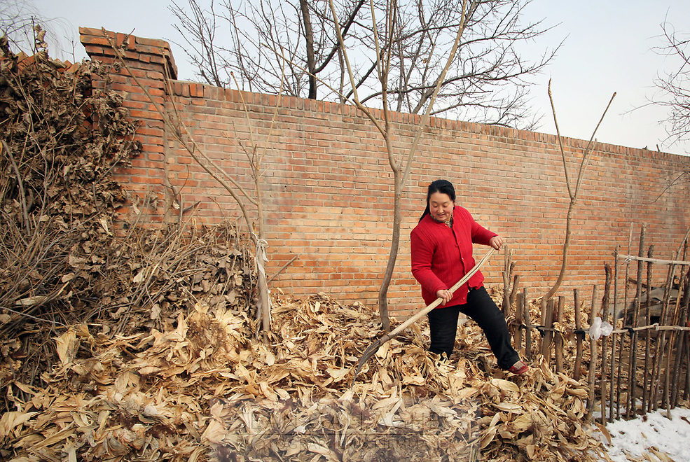 A woman raking dried corn husks in front of a newly constructed wall in Dongzhuangying Village, on the southern outskirts of Beijing. Villagers have been building new extensions to their properties in-light of news that their village will be destroyed to make way for a new city airport. Villagers will be compensated more depending on the area of their homes, resulting in new buildings appearing across the village, as villagers anticipate higher amounts of compensation from local government. China. Friday 25th January, 2013.