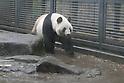 Ueno Zoo Giant Pandas mate after four-year hiatus