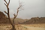 Amram valley in Eilat Mountains