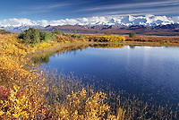 Autumn tundra and taiga, kettle pond, Alaska Range mountains, Denali National Park, Alaska.