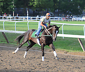 Hold Me Back preps for the 2009 Travers Stakes at Saratoga on Aug. 27, 2009.
