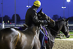 Dynaslew, trained by Seth Benzel and to be ridden by Corey Nakatani at Churchill Downs on October 31, 2011.