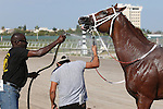 HALLANDALE BEACH, FL - JANUARY 21:  #5  Early Entry (FL) is cooled off after winning the Sunshine Millions Sprint at Gulfstream Park on January 21, 2017 in Hallandale Beach, Florida. (Photo by Liz Lamont/Eclipse Sportswire/Getty Images)