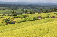 Jatiluwih, Bali, Indonesia.  Terraced Rice Paddies.